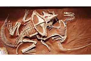 Velociraptor Were Birds But Not Exactly Birds, Read On To Find Out Why