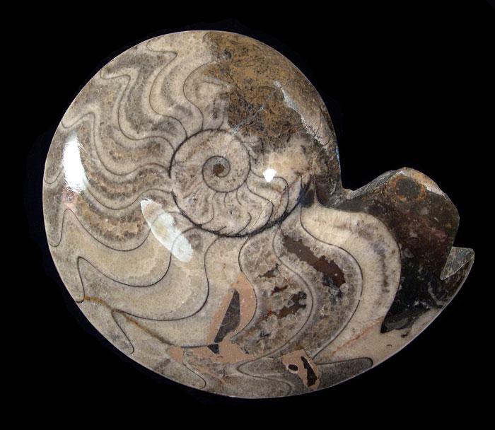 Morocco - Ammonites