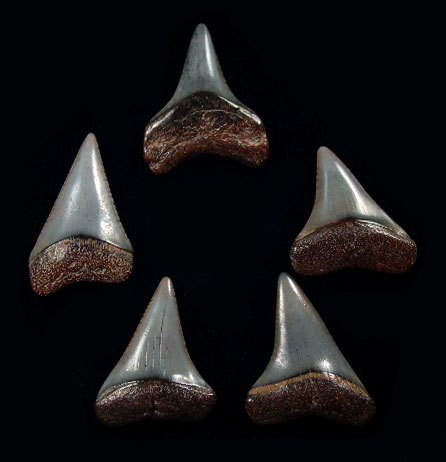 Peru - Jewelry teeth