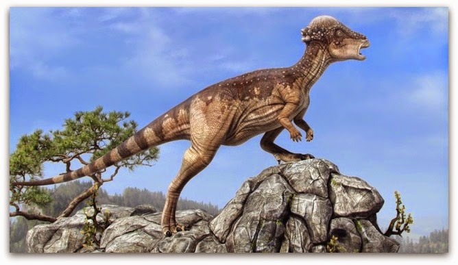 Image result for pachycephalosaurus
