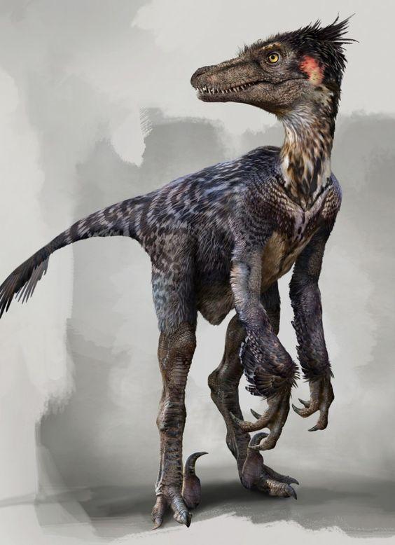 Dromaeosaurus (Raptors) - Coming 2016