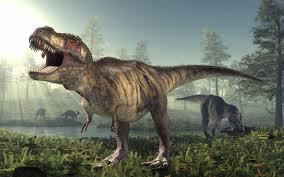Tyrannosaurus rex  (T-Rex) Teeth & Fossils