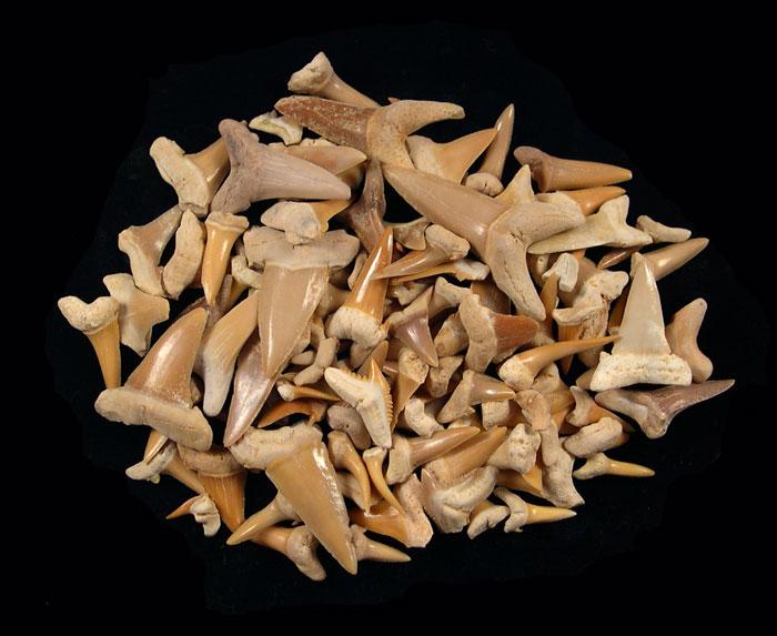 Togo bulk teeth