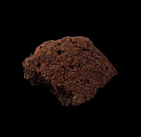Real Ankylosaurus scute for sale | Buried Treasure Fossils
