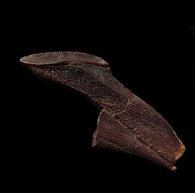 Edmontosaurus
