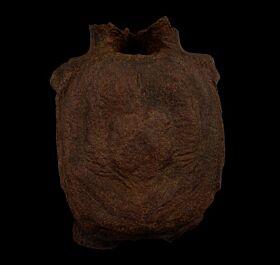 Extra Large Edmontosaurus vertebra for sale | Buried Treasure Fossils