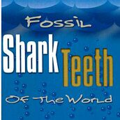 Fossil Shark Teeth of the World by Joe Cocke