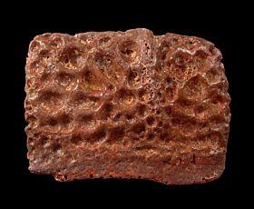 Large Kem Kem Crocodile scute for sale | Buried Treasure Fossils