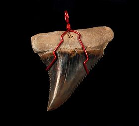 A wire wrapped brown Mako shark tooth pendant from Peru for a necklace.
