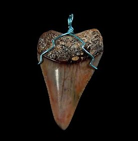 Peruvian Mako shark necklace for sale | Buried Treasure Fossils