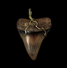 Cheap Great White tooth necklaces | Buried Treasure Fossils