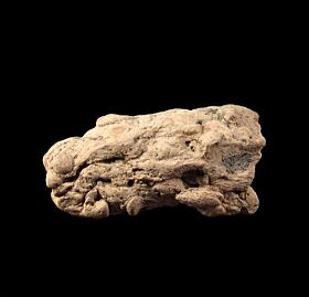 Coprolite - Fossil Shark Dung | Buried Treasure Fossils