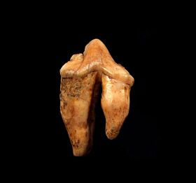 Ice Age Cave Hyena molar for sale | Buried Treasure Fossils