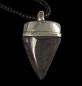 Shark Tooth Necklace Pendant