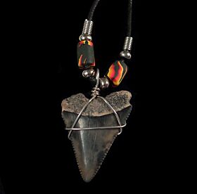 Large Great White shark tooth necklace for sale | Buried Treasure Fossils