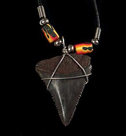 Real Great White shark tooth necklace for sale | Buried Treasure Fossils