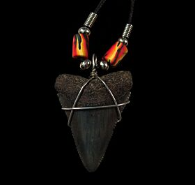 Beaded Great White shark tooth necklace for sale | Buried Treasure Fossils
