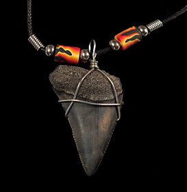 Quality Great White shark tooth necklace for sale | Buried Treasure Fossils