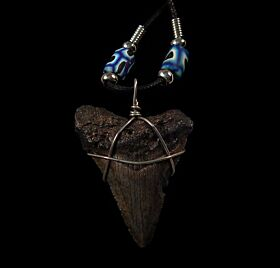 Cool Great White shark tooth necklace for sale | Buried Treasure Fossils