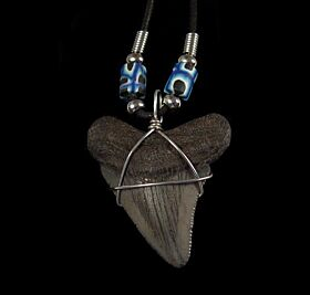 Big Megalodon shark tooth necklace for sale | Buried Treasure Fossils