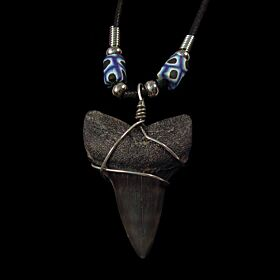 Fossil  shark tooth necklace for sale | Buried Treasure Fossils