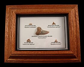 Sharktooth Hill Collection Frame for sale | Buried treasure Foss