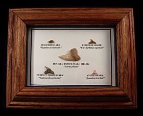 Sharktooth Hill Collection Frame