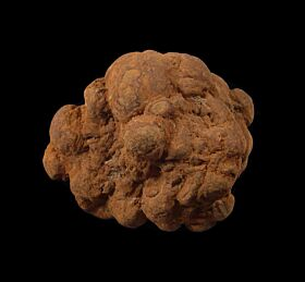 Coprolite fossil for sale : Buried Treasure Fossils