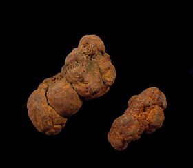 Real Coprolite for sale - Mammal : Buried Treasure Fossils
