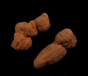 Coprolites for sale : Buried Treasure Fossils