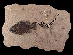 Cockereillites Fossil fish with clock for sale | Buried Treasure Fossils