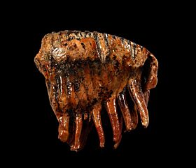 North Sea Woolly Mammoth tooth for sale | Buried Treasure Fossils
