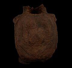 Edmontosaurus annectens vertebra for sale | Buried Treasure Fossils