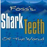 Fossil Shark Teeth of the World by Joe Cocke