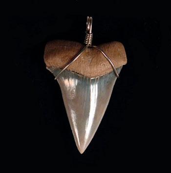 Jewelry Shark Teeth