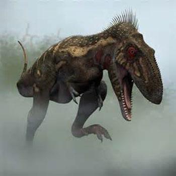 Nanotyrannus Teeth  (Little T-Rex)