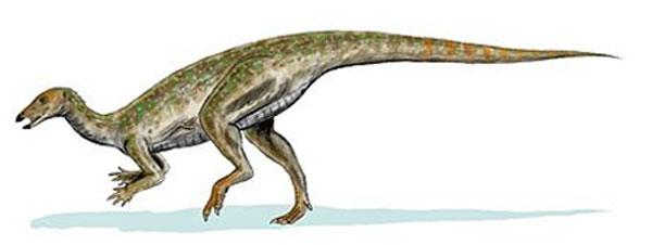 [Image: Thescelosaurus_BW-600.jpg]