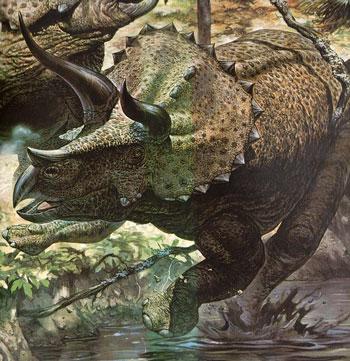Ceratopsians / Triceratops