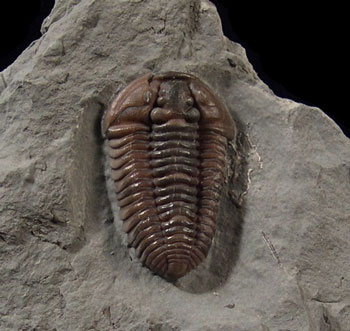3 Fun Facts You Probably Didn't Know About Fossils