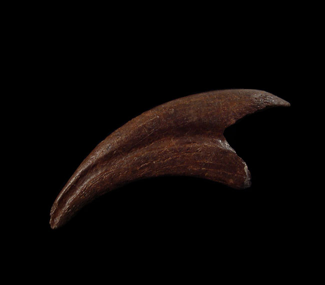 5 Interesting Facts About Dinosaur Claws That'll Blow Your Mind!