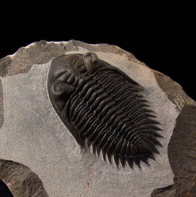 4 Terrific Trilobite Truths That You Should Know About