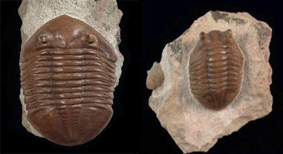 What You Need to Know About Trilobites in the Paleozoic Era