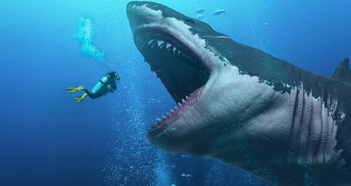 3 Interesting Facts about The Largest Extinct Mackerel Shark: Megalodon