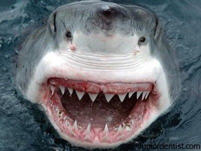 Understanding Shark Teeth - Why Do They Vary So Much?